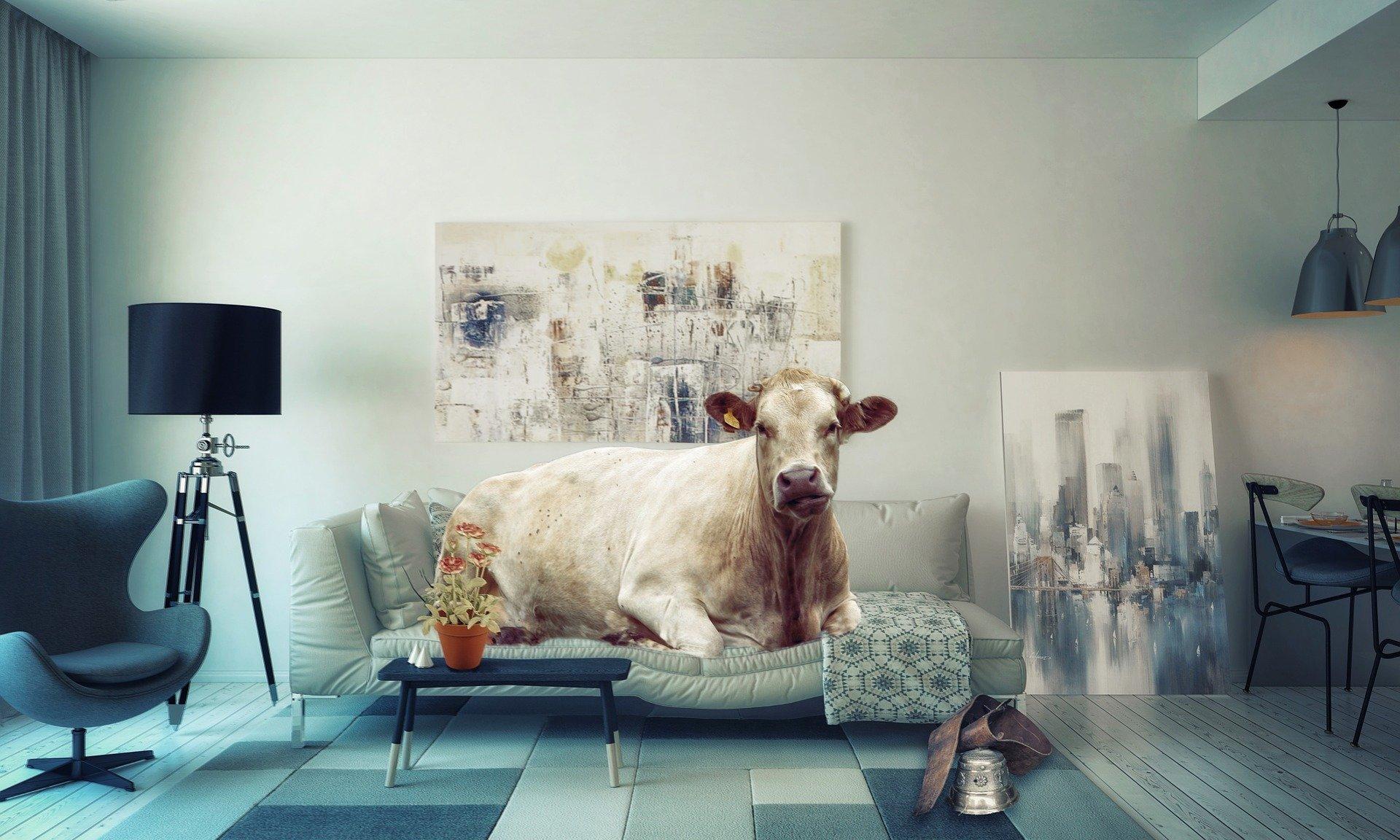 Mieszkanie obciążone hipoteką - jak je kupić?